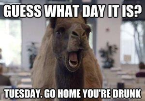 97451-hump-day-camel-meme-tuesday-go-oSfx